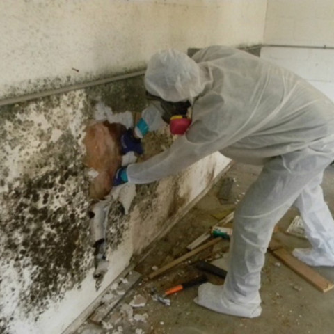 Mold Mildew Treatment